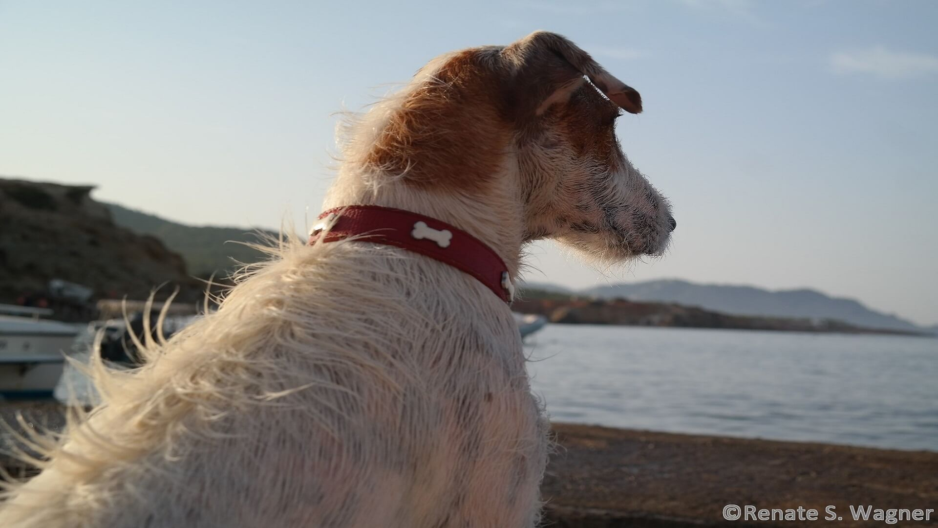Mallorca's airport has a heart for four-legged friends!
